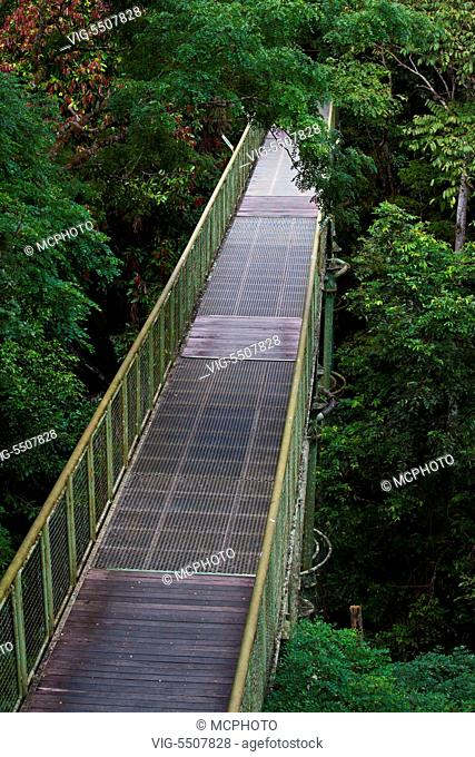 The 90 foot high CANOPY WALKWAY at the RAINFOREST DISCOVERY CENTER located in the KABILI SEPILOK FOREST in SABAH near the city of SANDAKAN - MALAYSIA, BORNEO -
