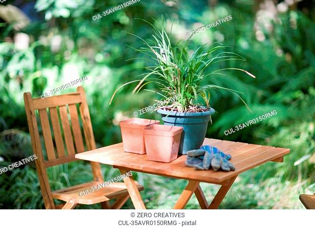 Potted plant on table in backyard