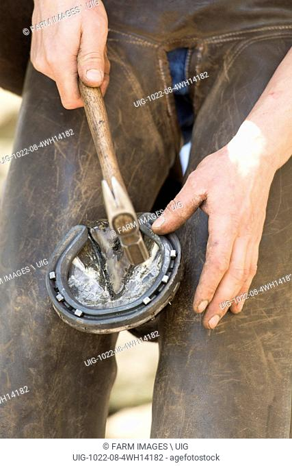 Farrier cold shoeing a horse
