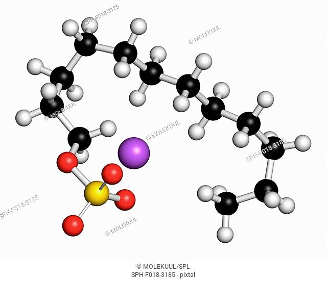Sodium dodecyl sulfate (SDS, sodium lauryl sulfate) surfactant molecule. Commonly used in cleaning products. Atoms are represented as spheres with conventional...