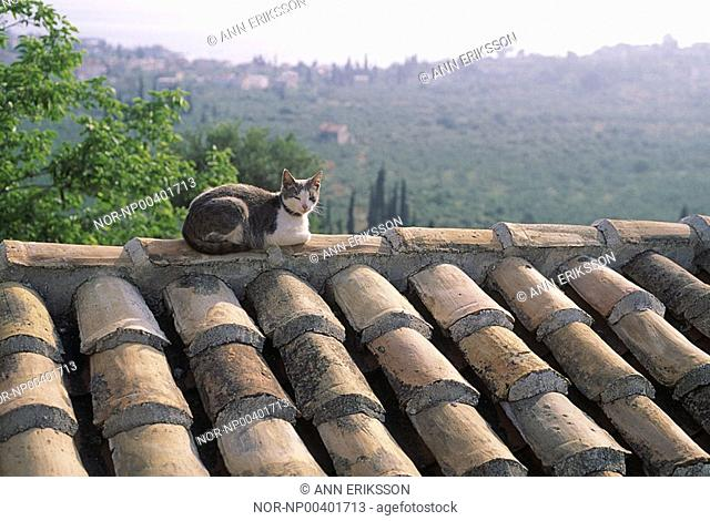Cat on a roof in Greece