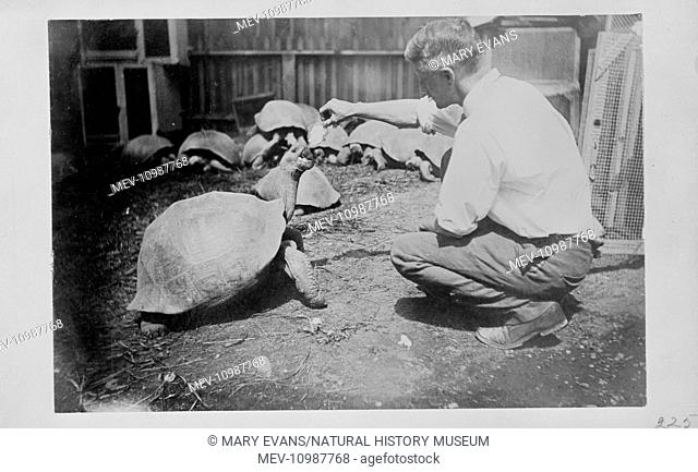 Sailor and explorer Charles Harris was despatched to the Galapagos islands to collect giant tortoises for Walter Rothschild in 1897