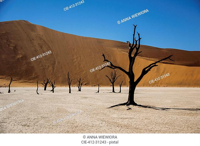 Burned trees in desert, Dead Vlei desert, Namibia