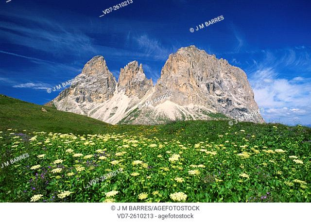 Sassolungo, Saslonch or Langkofel measures 3,181 m and is located in the Dolomites (Val Gardena, Alto Adige)