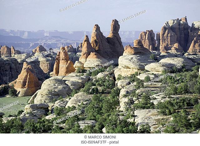 Needles rock formations, Canyonlands National Park, Utah, USA