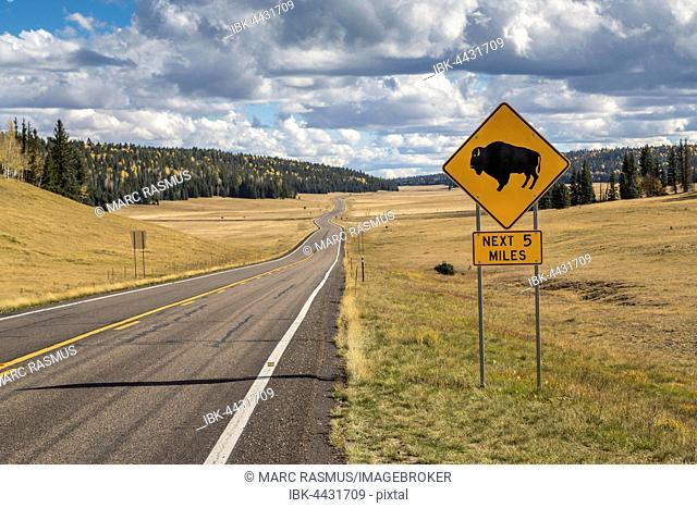 Road sign warns of crossing bison, warning sign, road to Grand Canyon North Rim, Arizona, USA