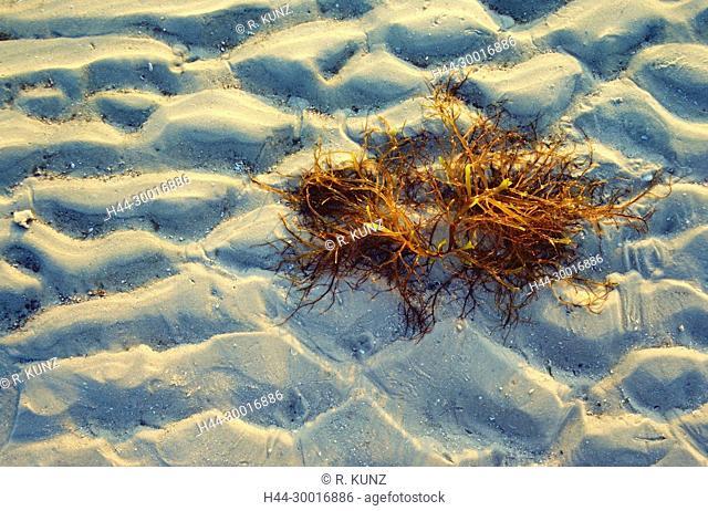 Beach, sandy beach, sand, seaweed, Fort Myers Beach, Florida, USA