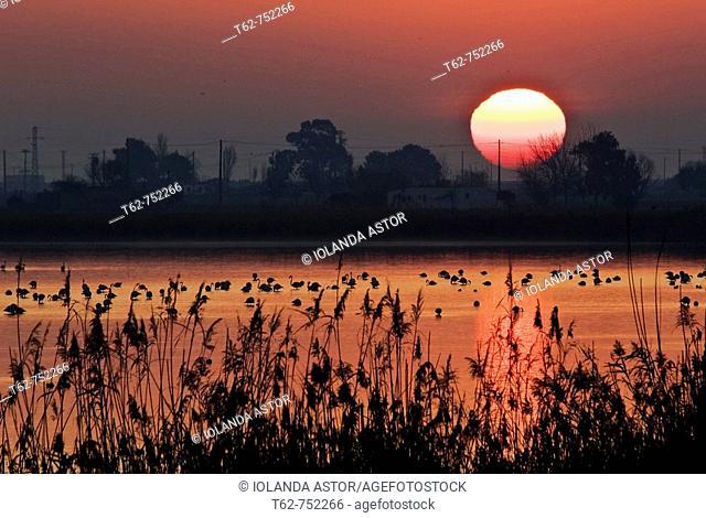 Laguna con flamencos. Puesta de sol en el Delta del Ebro, Tarragona, Cataluña, Spain
