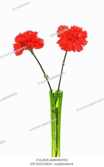 Two red carnations in green vase isolated on white