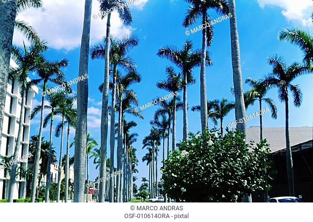 USA florida palm beach avenue with palm trees