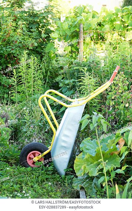 Wheel barrow in green garden. Summer gardening equipment