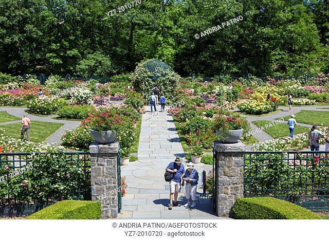 Garden visitors at the Peggy Rockefeller Rose Garden, New York Botanical Garden, Bronx, NY, USA