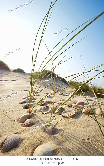 Beach near Conil de la Frontera, Costa de la Luz, Andalusia, Spain, Europe