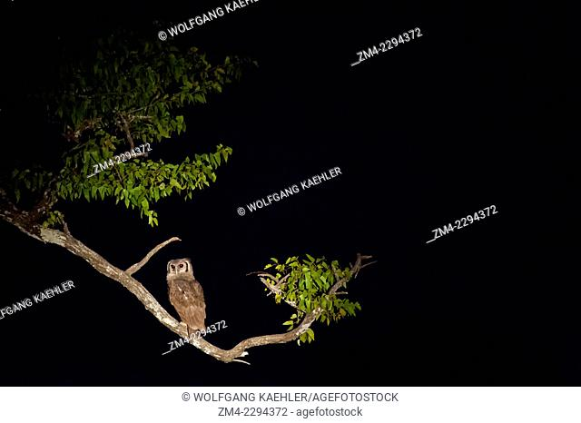 Verreaux's (Giant) Eagle Owl at night in South Luangwa National Park in eastern Zambia