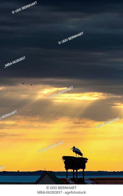 Austria, Burgenland, Mörbisch at the Lake, sunrise, stork
