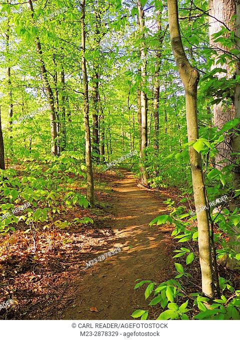 A hiking trail cuts through the new foliage of spring, Pennsylvania, USA