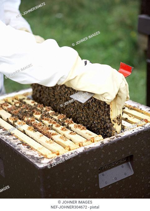 A bee-keeper working