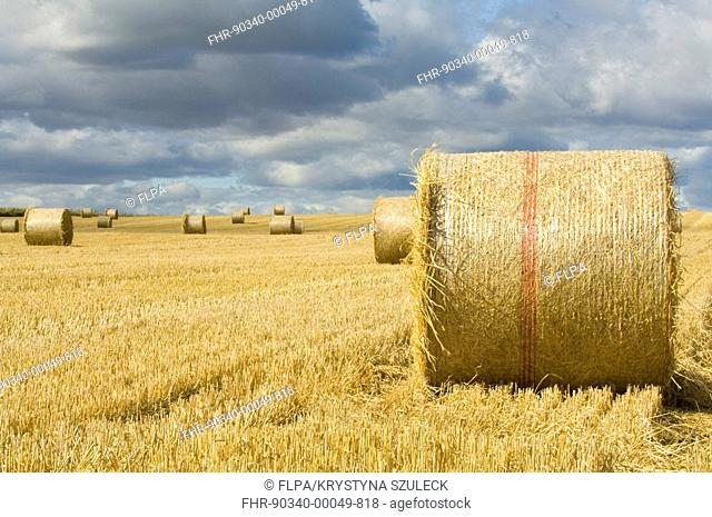 Round straw bales in wheat stubble field, cloudy sky, near Crail, Fife, Scotland, september