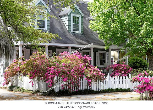 Wilmington, North Carolina. Blooming Azaleas on white picket fence in historic downtown