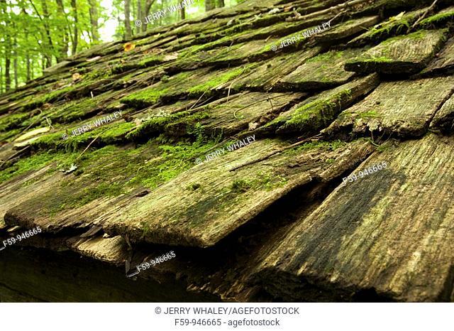 Wood Shingles, Greenbrier Area, Great Smoky Mtns Nat  Park, TN