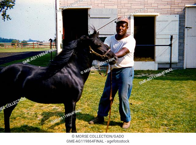 Portrait of an African American man posing with a young black bridled horse, in a yard outside a barn, June, 1959