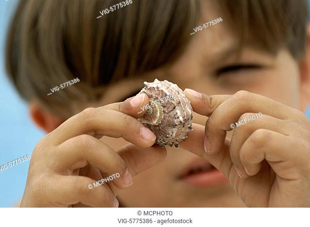 Ein kleiner Junge betrachtet eine Muschel, Mittelmeer, Spanien| A little boy with a shell in his hand - Menorca, Balearen, Spain, 18/06/2008