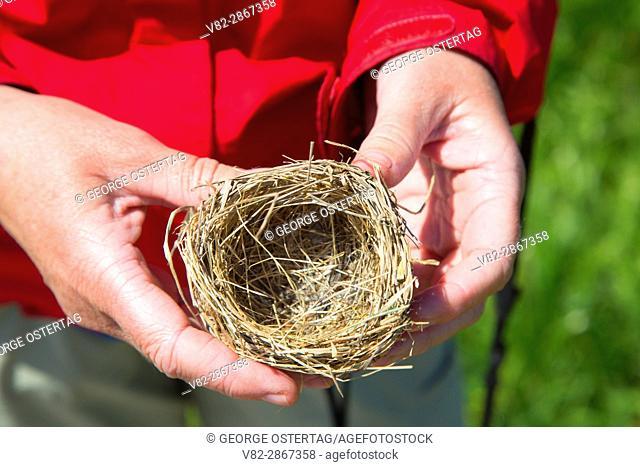 Bird nest, Arcata Marsh and Wildlife Sanctuary, California