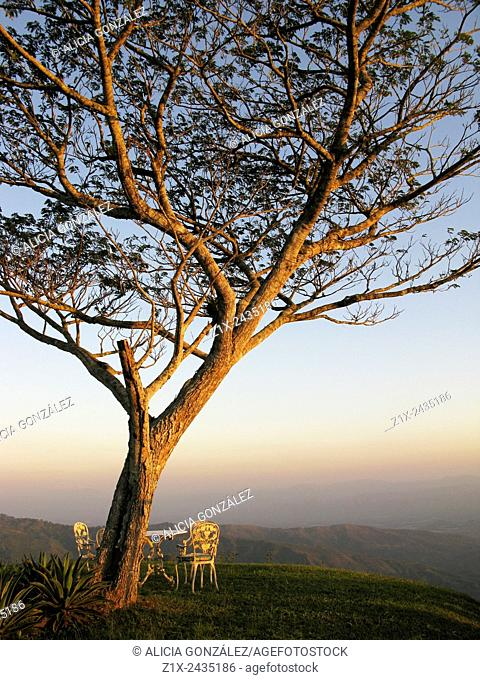 Scenic view of Samanea saman tree and mountains of valles del Tuy Miranda state Venezuela