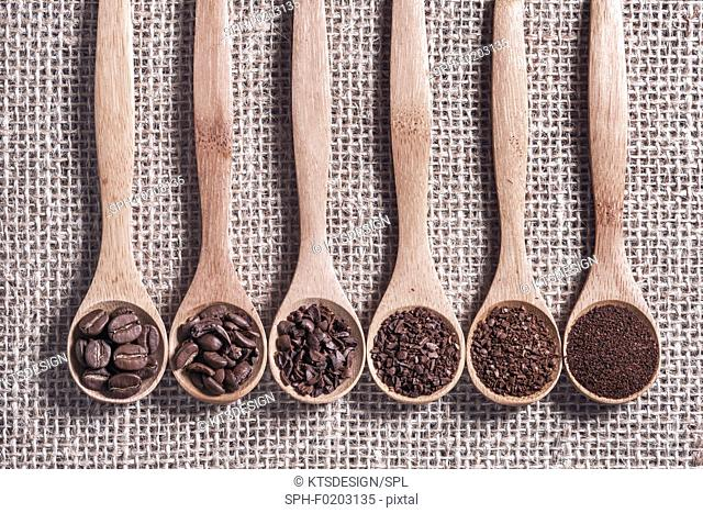 Coffee beans and grinds on wooden spoons