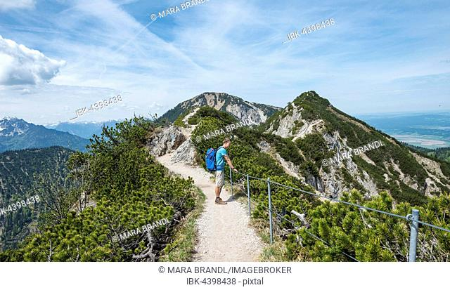 Hiker on trail, Herzogstand-Heimgarten ridge walk, Heimgarten behind, Upper Bavaria, Bavaria, Germany