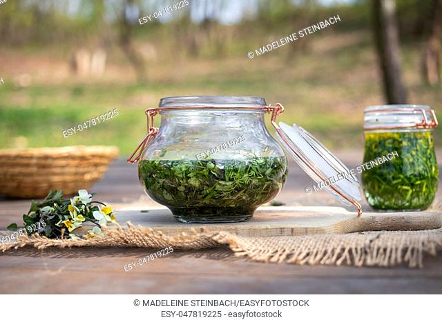 Preparation of herbal tincture from field pansy, or Viola arvensis flowers