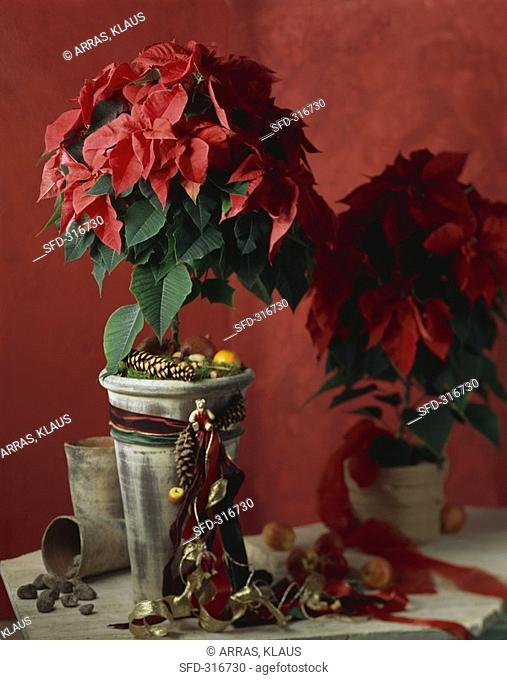 Red poinsettia with Advent decorations