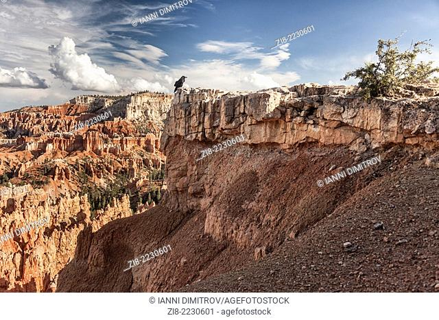 Raven in rocky landscape with hoodoos,Bryce Canyon,Utah,USA