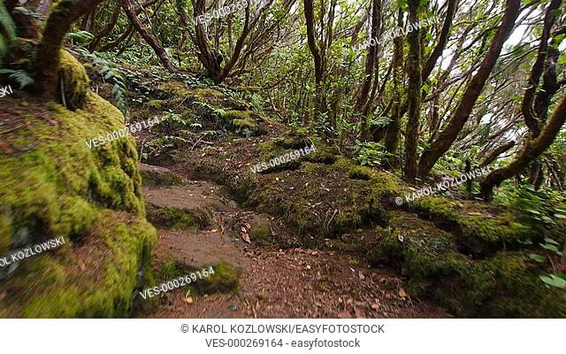 El Pijaral – La Ensillada – Cabeza de Tejo, walking through Bosque Encantado in Anaga Forest on Tenerife, Canary Islands, Spain