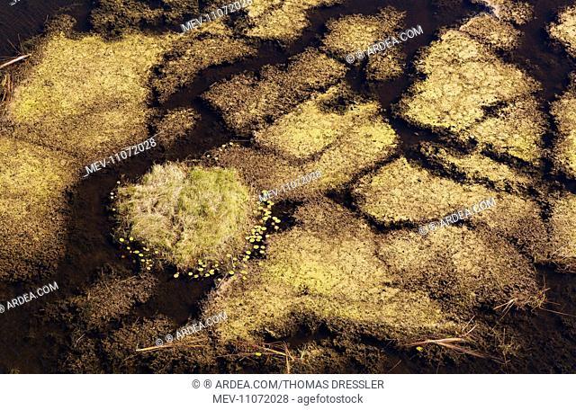 Marshland with aquatic plants aerial view - Okavango Delta, Moremi Game Reserve, Botswana