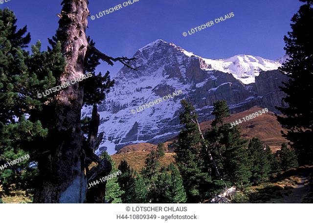 alpine, Alps, Bernese Oberland, Eiger north face, forest, meadows, Mountain, Kleine Scheidegg, Switzerland, Europe