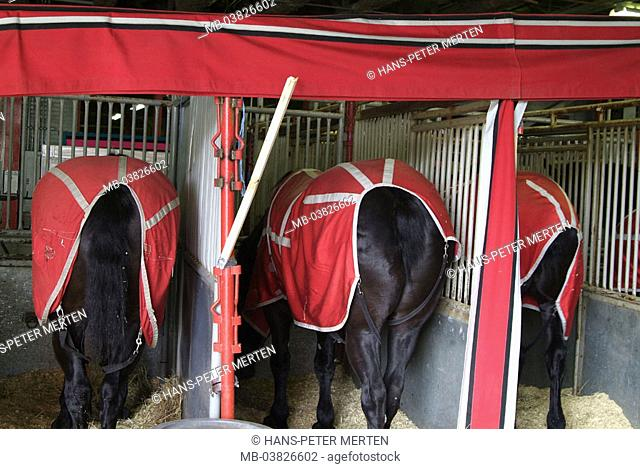 Horse boxings, horses, view from behind