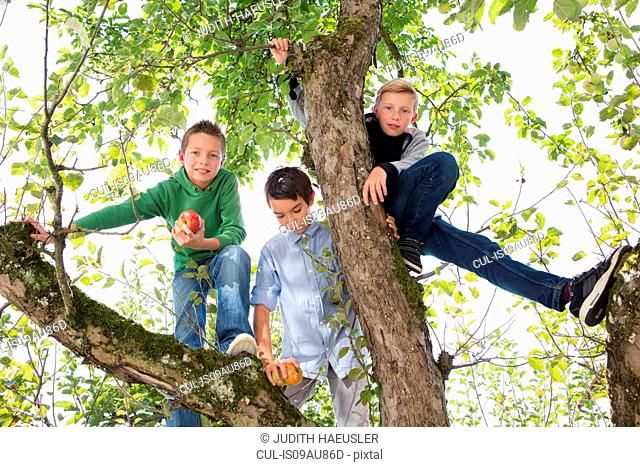 Portrait of teenage boy and brothers holding picked apples in apple tree