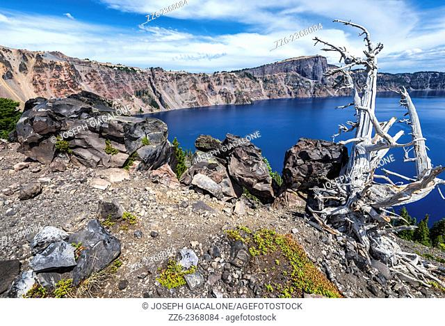 Rocks and pine tree trunk on the Wizard Island crater rim. Crater Lake National Park, OR, USA