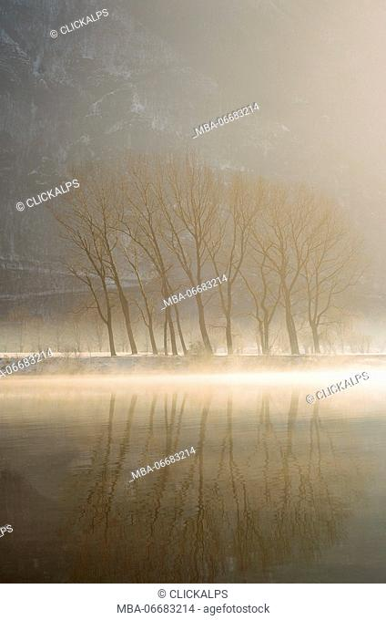 Ido lake,Brescia,Lombardy,Italy A group of trees in the fog, taken at dawn on the Idro lake