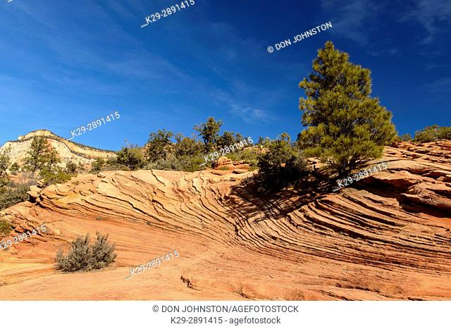 Eroded sandstones in the Beehive area of Zion Park, Zion National Park, Utah, USA