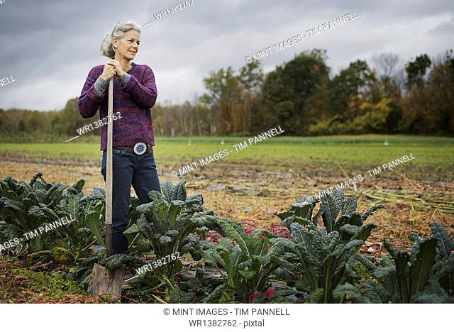 Organic Farmer at Work. A woman leaning on a hoe among a line of cabbages