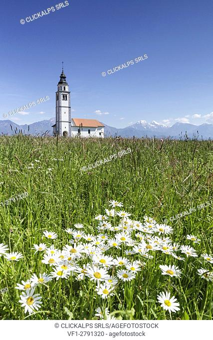 Europe, Slovenia, Upper Carniola, Kranj. The Church of Saint Ursula in the middle of the fields of Sorsko Polje, just outside of the village of Srednje Bitnje