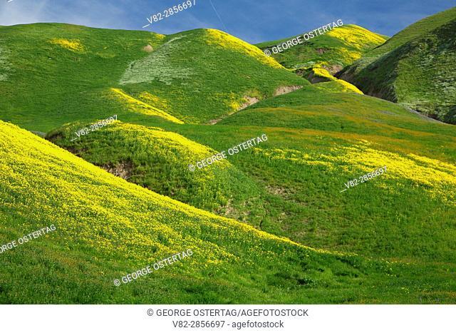 San Emigdio Mountains slope, Wind Wolves Preserve, California