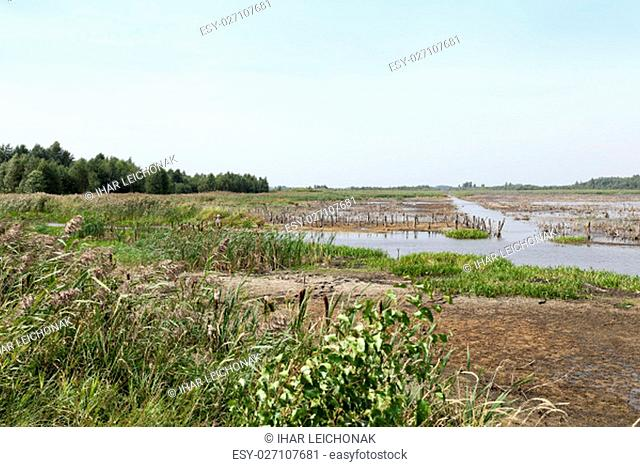 photographed the territory in which is located the marsh, the end of the summer season, open space