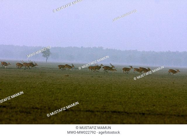 Spotted deer on Nijhum Dwip Nijhum Island, a cluster of islands emerged in the early 1950s in the shallow estuary of the Bay of Bengal on the south of Noakhali...