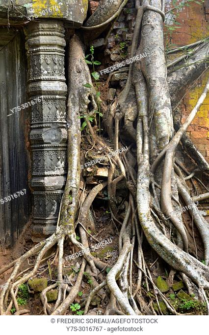 Tree roots wrapped around the hidden jungle of Prasat Pram at Koh Ker, Siem Reap, Cambodia, South East Asia, Asia