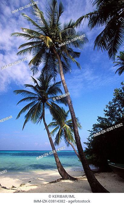 Palm trees and the sea classical Maldives Photo Here Lohifushi Island, Maldives, Asia