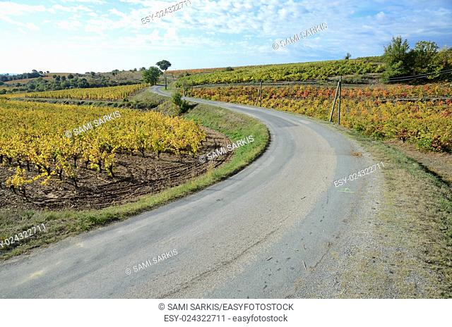 Road by vineyards with fall foliage, AOC Faugeres, Herault, France, Europe