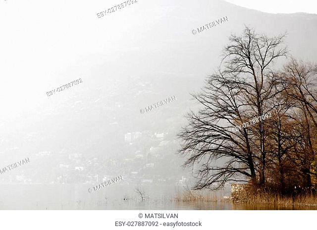 Trees and pampas grass on a foggy alpine lake with mountains